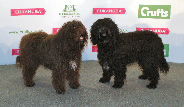 Martha and Snoop getting used to the limelight at Crufts.