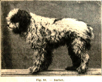 barbet from `Le Chien` by Paul Dechambre