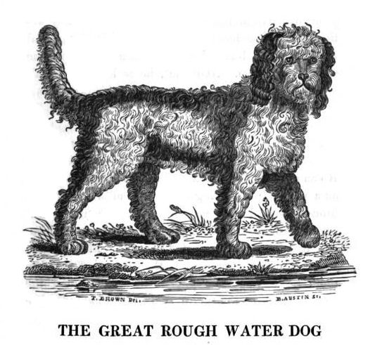 THE GREAT ROUGH WATER DOG
