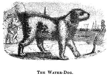 Water Dog.
