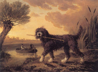 English Water Dog 1803.